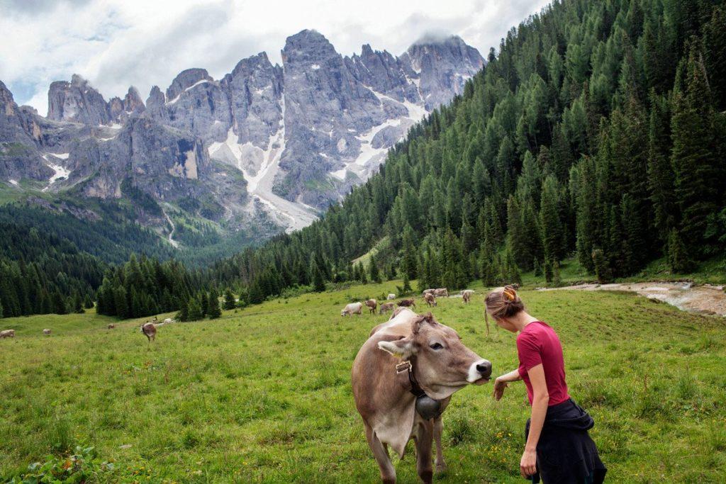 val-di-fiemme---val-venegia---parco-naturale-paneveggio-pale-di-san-martino_28542